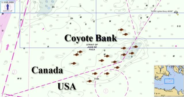 coyote-bank1