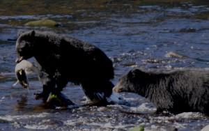 bear6-300x188