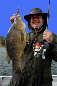Australian Golden Perch at Lake St. Clair in New South Wales Australia