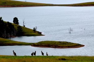 Bass Fishing in Australia