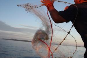 Panama-Big-Game-Casting-Net-for-Sardines-300x200