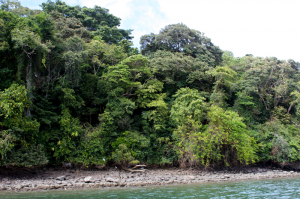 Panama-Big-Game-Fishing3-300x199