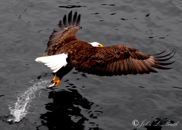 Eagle11-sm
