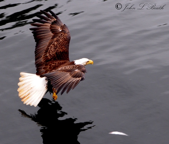 Eagle14-sm