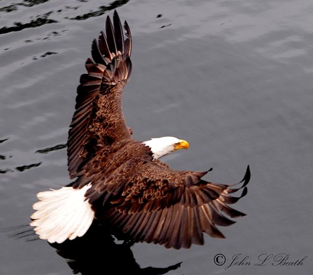 Eagle15-sm