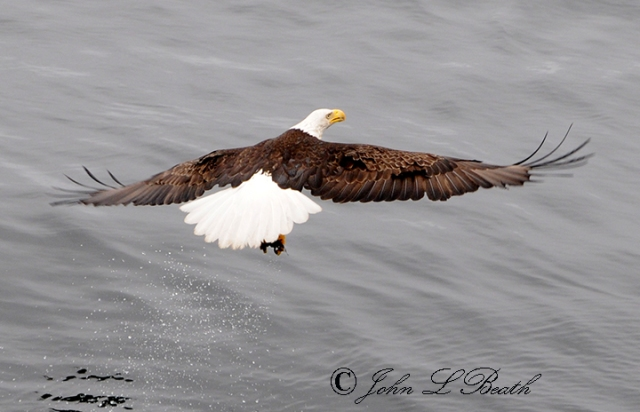 Eagle16-sm