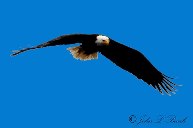 Eagle5-sm